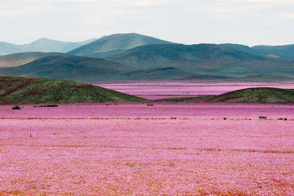Desierto rosa Chile principal